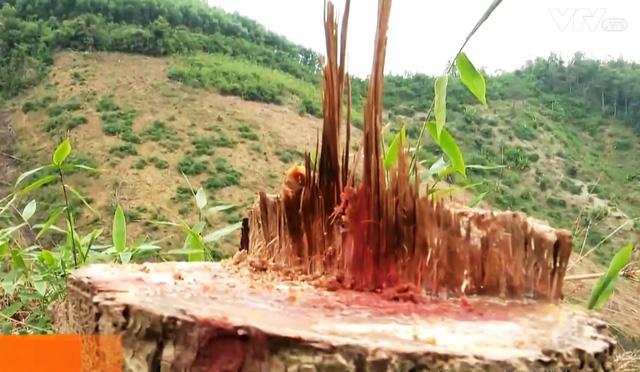 Phức tạp tình trạng phá rừng chiếm đất sản xuất - Ảnh 1.