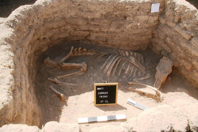 """Ai Cập phát hiện """"thành phố vàng"""" 3.000 năm tuổi - ảnh 1"""