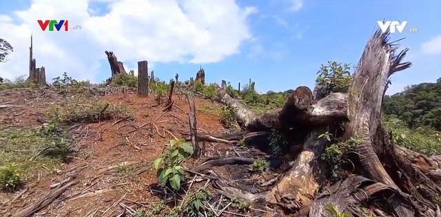 Nóng tình trạng đốt phá rừng làm nương rẫy tại Kon Tum - Ảnh 1.
