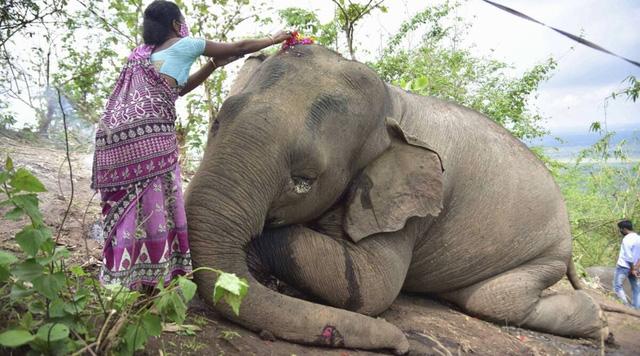 Sét lớn đánh chết 18 con voi ở Ấn Độ - ảnh 1