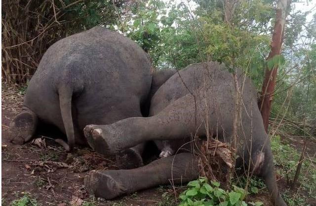 Sét lớn đánh chết 18 con voi ở Ấn Độ - ảnh 2