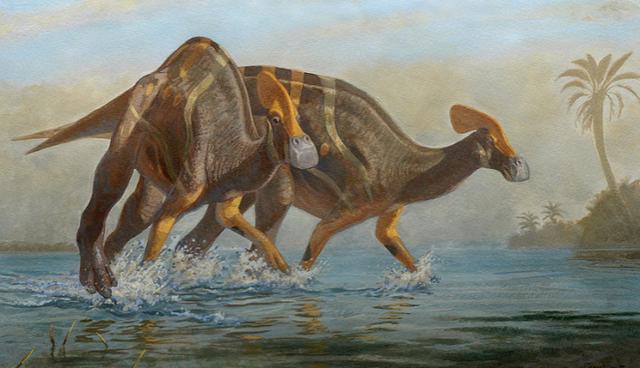 Phát hiện hóa thạch 72 triệu năm của khủng long mỏ vịt có mào dài hơn 1,3 m - ảnh 1
