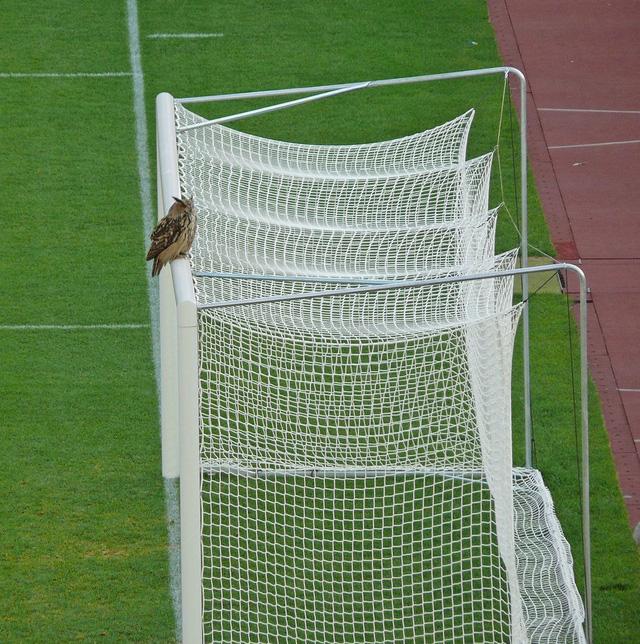 Tìm hiểu về linh vật của 2 đội tuyển lần đầu góp mặt tại UEFA EURO - Ảnh 1.