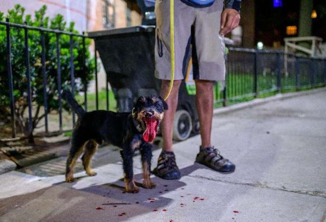 Biệt đội chó diệt chuột dũng cảm tại New York - ảnh 3