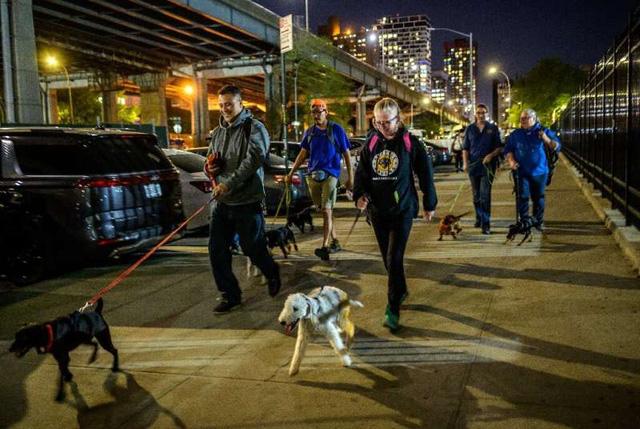 Biệt đội chó diệt chuột dũng cảm tại New York - ảnh 1