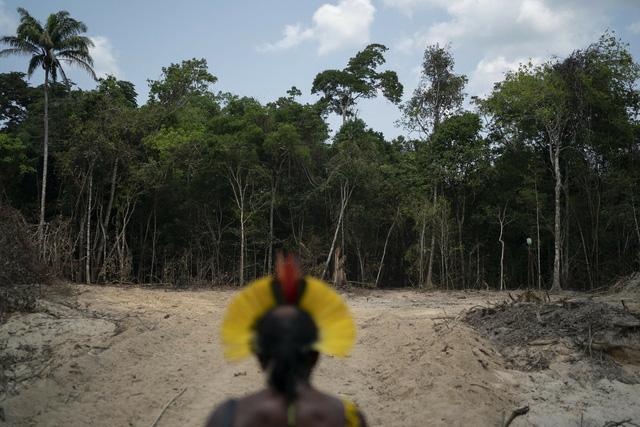 Rừng Amazon thải nhiều carbon hơn lượng khí thải hấp thụ - ảnh 1