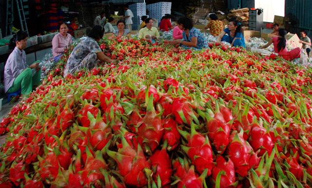 Xuất khẩu rau quả tăng hơn 12% trong 4 tháng đầu năm - ảnh 1