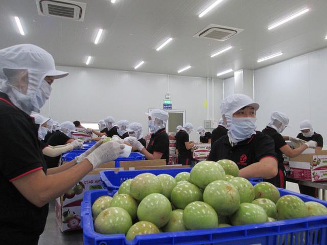 """Để xuất khẩu rau quả đạt 10 tỷ USD: Cần gỡ """"nút thắt"""" công nghệ bảo quản - ảnh 1"""