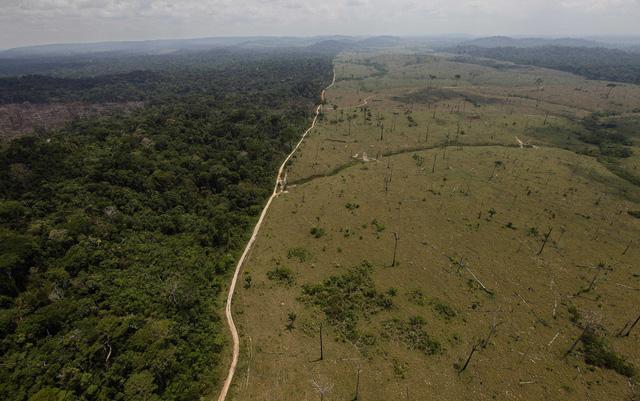 Năm 2021 có thể ghi nhận kỷ lục phá rừng Amazon trong năm thứ 4 liên tiếp - Ảnh 1.