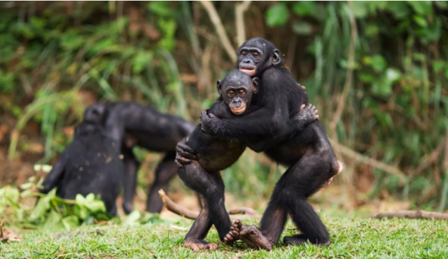 Động vật có ôm nhau không? - ảnh 1