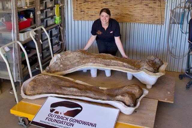 Phát hiện loài khủng long mới có kích cỡ khổng lồ tại Australia - Ảnh 1.