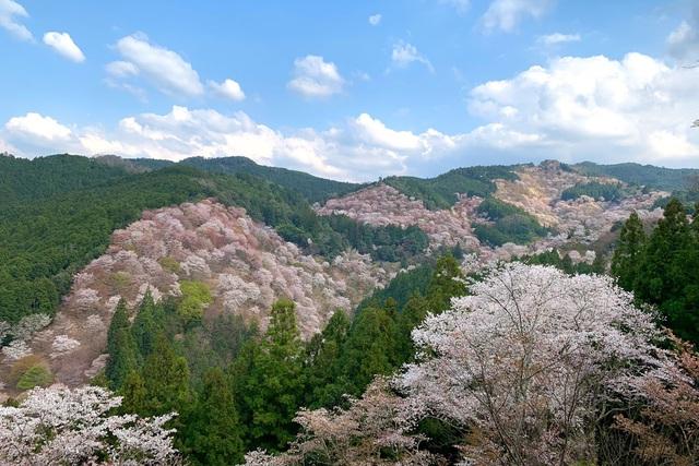 """COVID-19: Những điểm du lịch sầm uất của Nhật Bản trở nên """"hoang vắng"""" lạ thường - ảnh 1"""