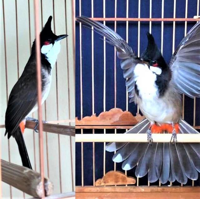 Tháng hành động vì môi trường suy nghĩ về thú chơi chim cảnh - Ảnh 1.