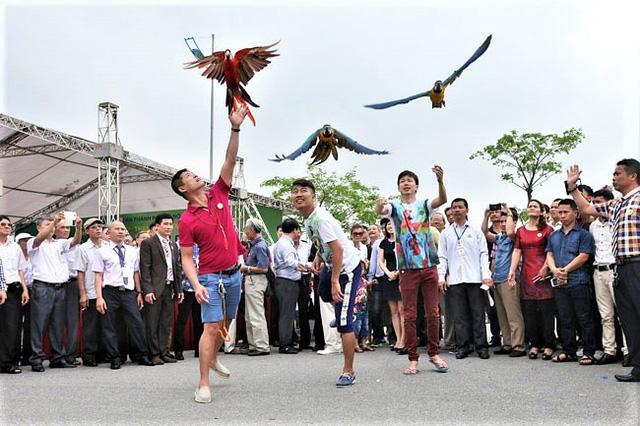 Tháng hành động vì môi trường suy nghĩ về thú chơi chim cảnh - Ảnh 2.