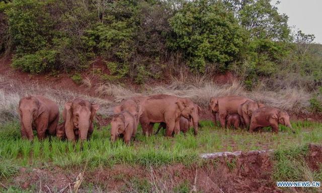 Đàn voi cùng ngủ gây sốt trên mạng - Ảnh 4.