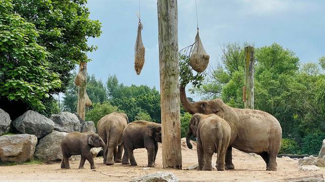 Nuôi nhốt voi trong vườn thú có thể bị coi là bất hợp pháp tại Anh - ảnh 1