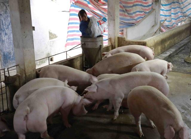 Giá lợn hơi tiếp tục giảm, có thể về mức 55.000 - 56.000 đồng/kg - Ảnh 1.