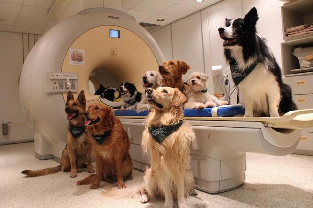 Chó có khả năng hiểu người bẩm sinh, nhưng chó sói thì không - Ảnh 1.