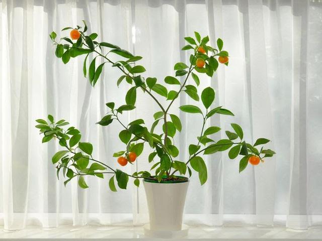 Không cần mua hoa quả tích trữ, bạn có thể trồng những trái cây này tại nhà - ảnh 1