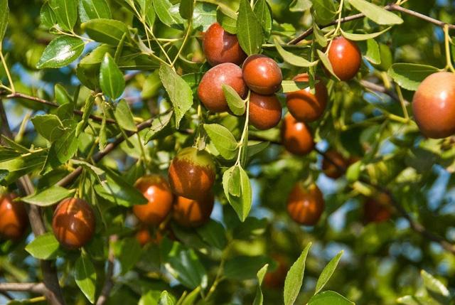 Không cần mua hoa quả tích trữ, bạn có thể trồng những trái cây này tại nhà - ảnh 2