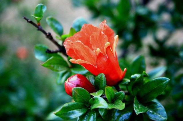 Không cần mua hoa quả tích trữ, bạn có thể trồng những trái cây này tại nhà - ảnh 8