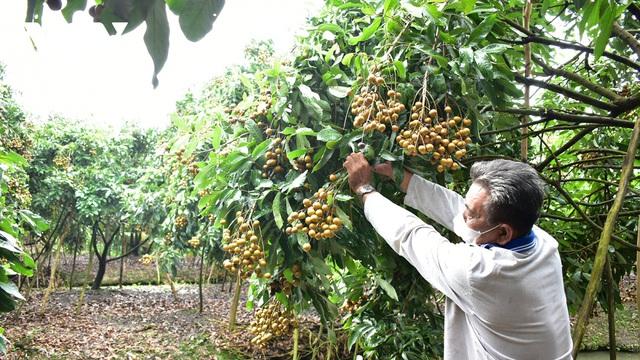 Nhiều giải pháp khơi thông đầu ra cho nông sản ĐBSCL - ảnh 1