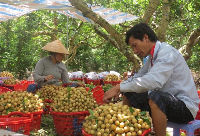 Gỡ vướng tiêu thụ nông sản cho khu vực phía Nam - Ảnh 1.