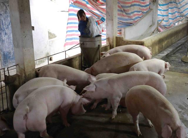 Doanh nghiệp chăn nuôi, sản xuất gặp khó vì kiểm dịch mỗi nơi một kiểu - Ảnh 1.