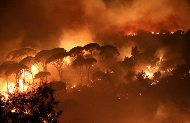 Cháy rừng nghiêm trọng tàn phá miền Bắc Lebanon - Ảnh 1.