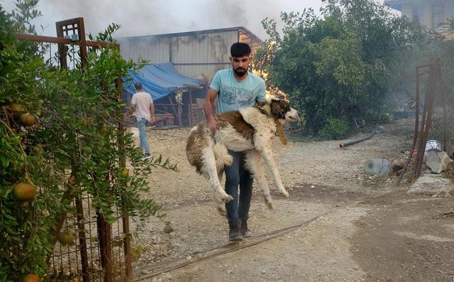 Cháy rừng ở miền Nam Thổ Nhĩ Kỳ khiến 3 người thiệt mạng, hàng chục người phải nhập viện - Ảnh 1.
