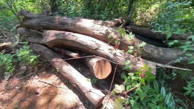 Ngang nhiên chặt phá cây rừng phòng hộ mở đường lên núi Dinh - Ảnh 1.