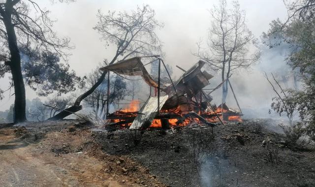 Cháy rừng tại Thổ Nhĩ Kỳ lan rộng, số nạn nhân thiệt mạng tăng lên 6 người - Ảnh 8.