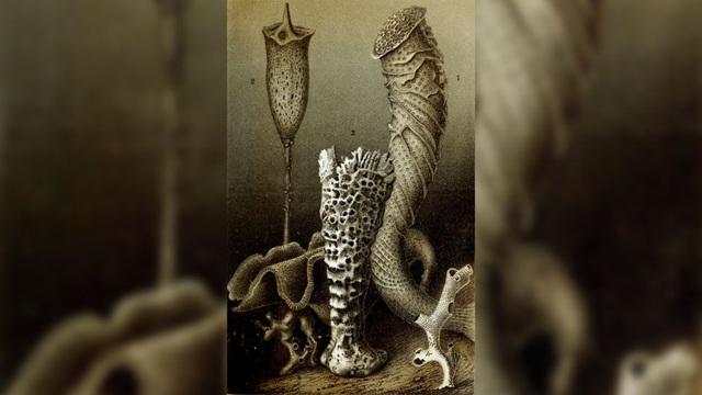 10 loài động vật sống lâu nhất trên Trái đất - ảnh 8