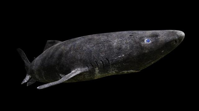 10 loài động vật sống lâu nhất trên Trái đất - ảnh 4