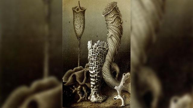 """10 loài sinh vật sống """"thọ"""" nhất trên thế giới - Ảnh 3."""