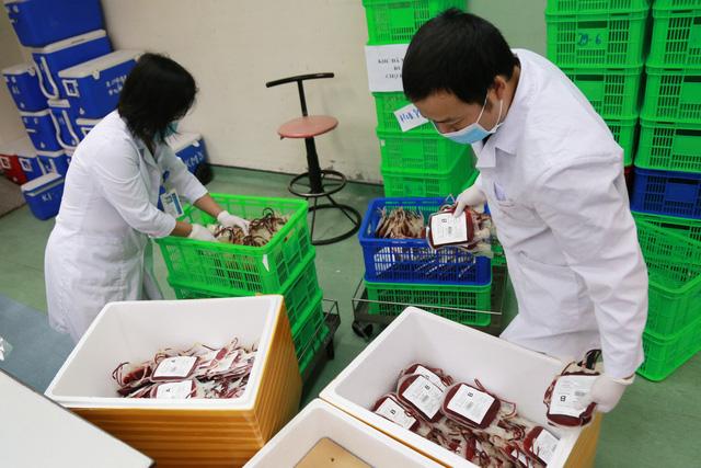Tiếp tục chuyển 2.000 đơn vị máu vào TP. Hồ Chí Minh - Ảnh 1.