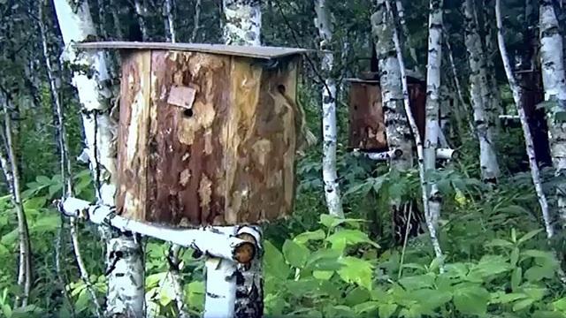 Độc đáo nghề nuôi ong truyền thống tại Nga - Ảnh 1.