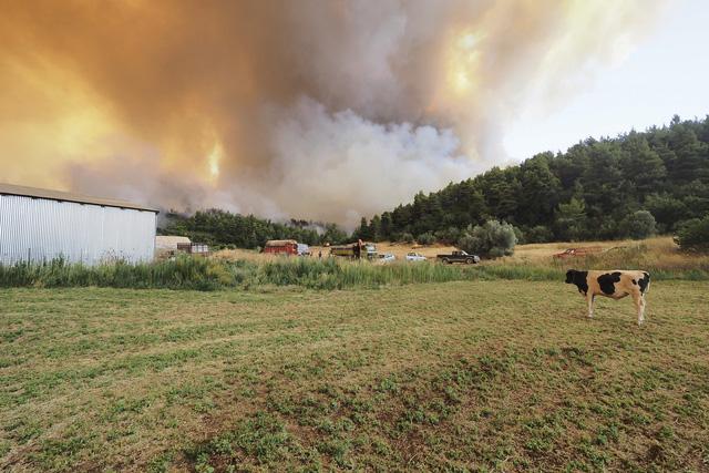 Cháy rừng ở Hy Lạp bước sang ngày thứ 3, địa điểm tổ chức Thế vận hội cổ đại được bảo toàn - Ảnh 6.