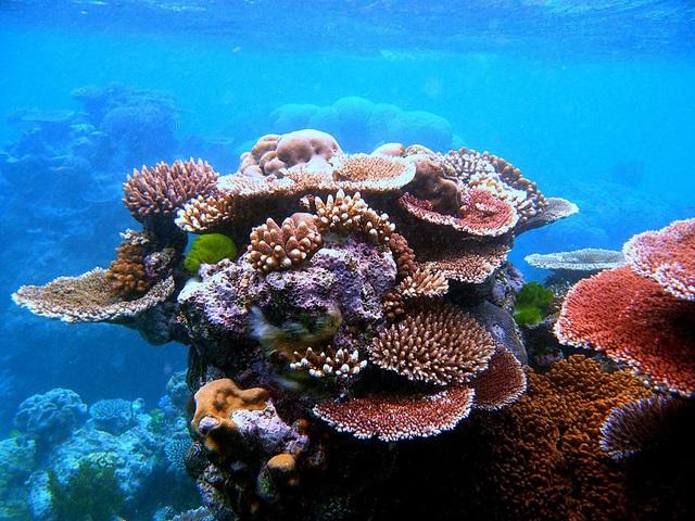 Siêu dự án Dubai lên kế hoạch tạo ra rạn san hô khổng lồ - ảnh 2