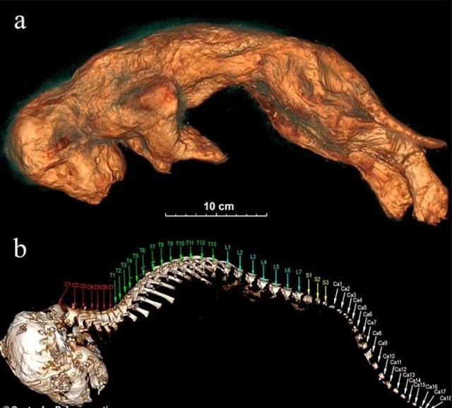 Phát hiện xác sư tử 28.000 tuổi nguyên vẹn trong hang động cổ đại - ảnh 3