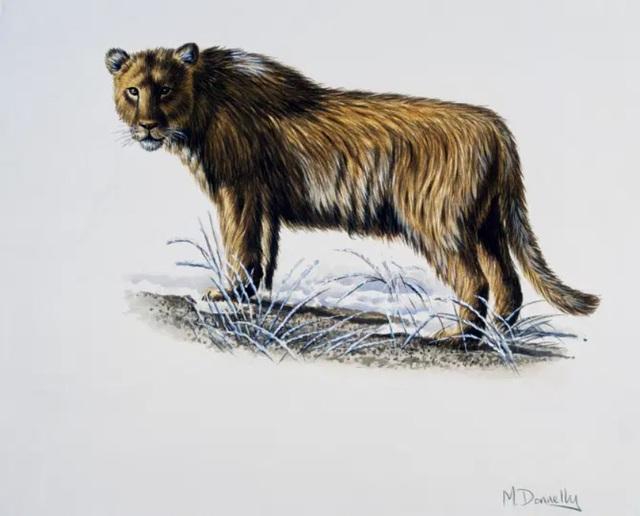 Phát hiện xác sư tử 28.000 tuổi nguyên vẹn trong hang động cổ đại - ảnh 4