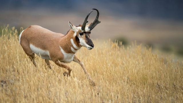 9 loài động vật nhanh nhất thế giới - ảnh 2