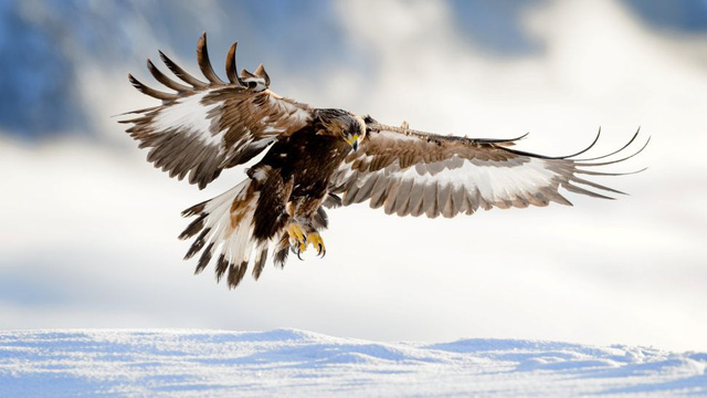 9 loài động vật nhanh nhất thế giới - ảnh 8