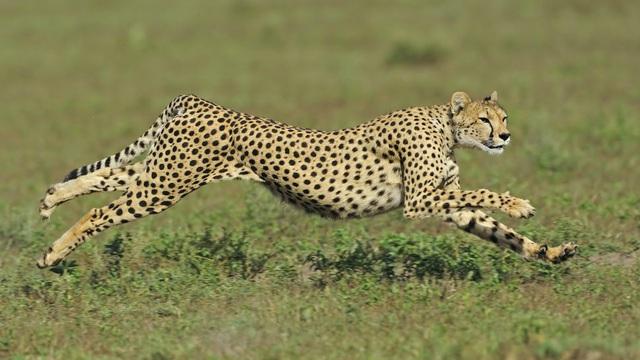 9 loài động vật nhanh nhất thế giới - ảnh 3