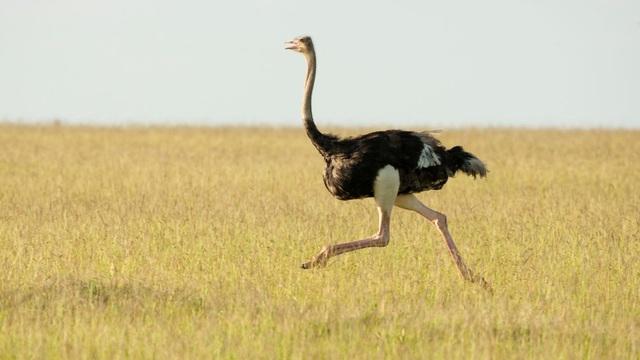 9 loài động vật nhanh nhất thế giới - ảnh 1