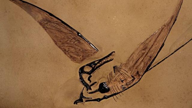 """Phát hiện hóa thạch """"rồng bay"""" tồn tại cách đây 160 triệu năm - Ảnh 1."""