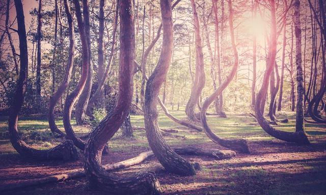 7 khu rừng ấn tượng  đẹp hút hồn du khách - Ảnh 1.