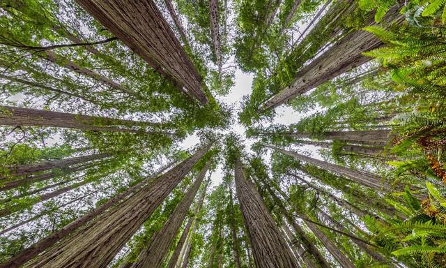7 khu rừng ấn tượng  đẹp hút hồn du khách - Ảnh 3.