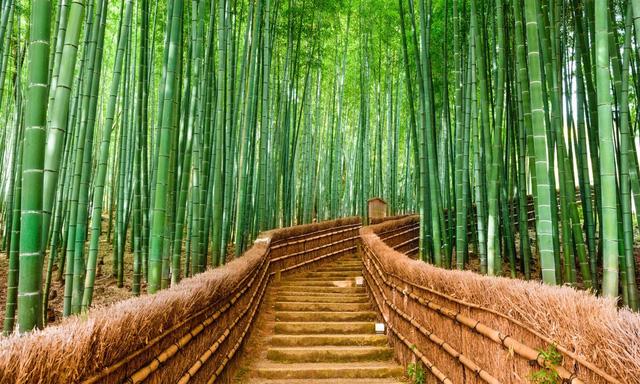 7 khu rừng ấn tượng  đẹp hút hồn du khách - Ảnh 4.