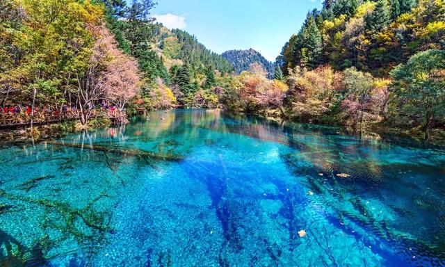 7 khu rừng ấn tượng  đẹp hút hồn du khách - Ảnh 5.